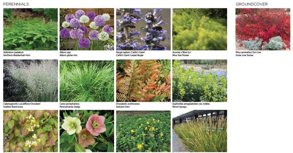 Proposed plantings at East Market Phase 3. Credit: National Real Estate Development / Ennead Architects / Morris Adjmi / BLTa via CDR